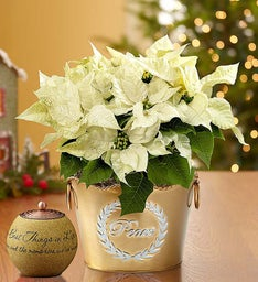 Peace on Earth Poinsettia for Sympathy