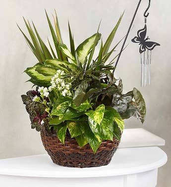 Butterfly Chime Dish Garden for Sympathy