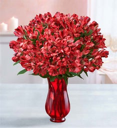 Valentine's Day Peruvian Lily Bouquet, 50-100 Blooms