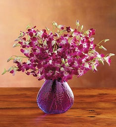 Exotic Breeze™ Orchids