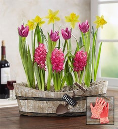 Springtime Vineyard Bulb Garden + Free Gloves