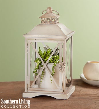 Rustic Lantern Succulents by Southern Living