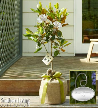 Magnolia Tree with Personalized Plaque